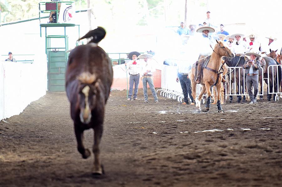 Un pial de 19 unidades acertó Ernesto Ignacio Anaya Barrón, en su primera oportunidad para Rancho Nuevo de Tepatitlán