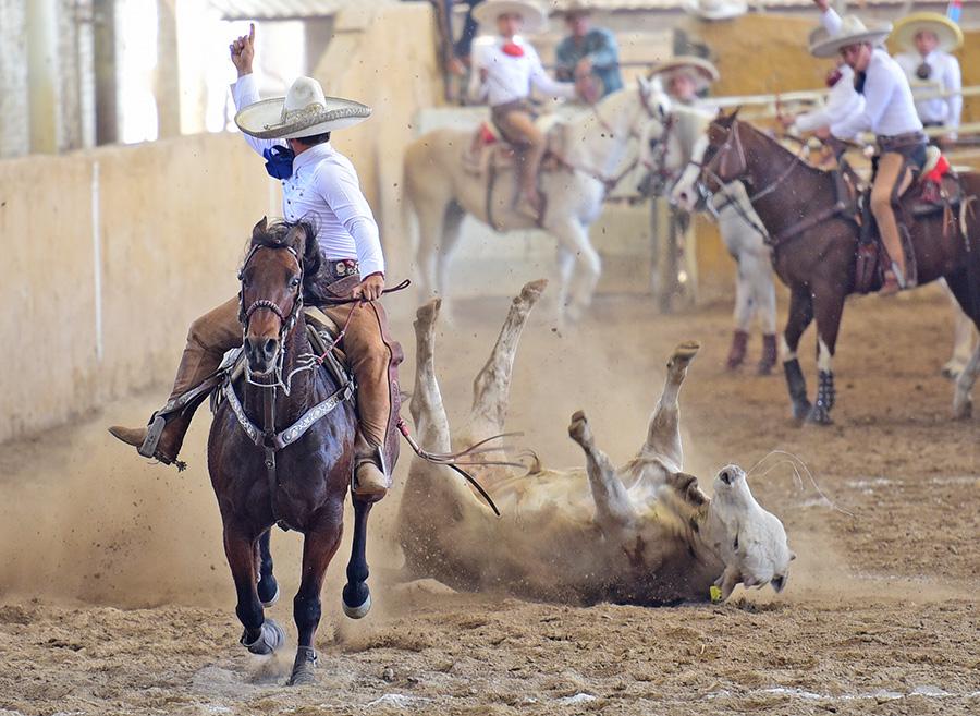 Rancho El Quevedeño coleó fortísimo, acumulando 103 puntos en esta faena