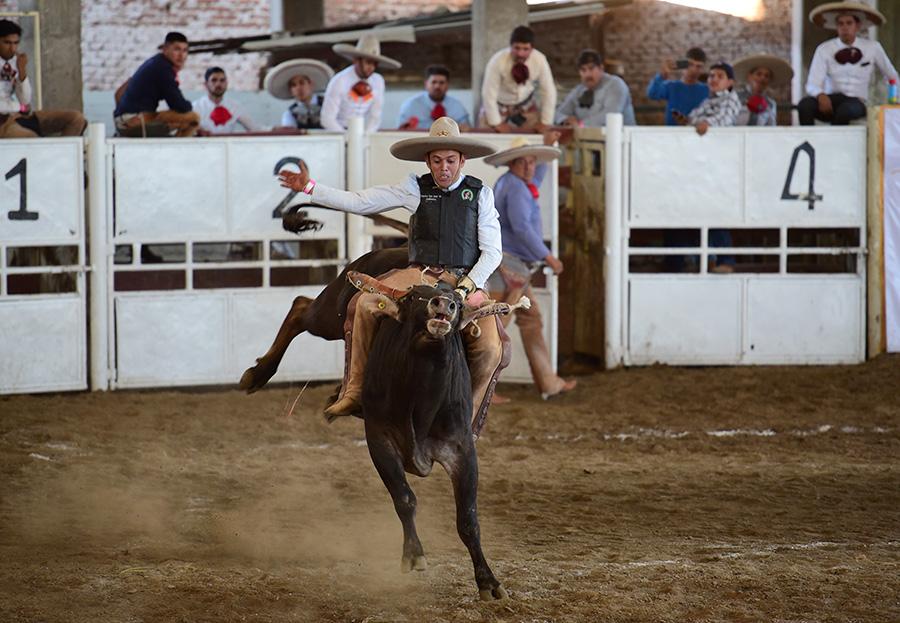 """Fuertes reparos de este toro aguantó Fernando Centeno Padilla, jinete de Rancho San José """"B"""""""