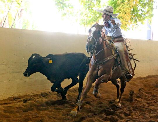 Rodrigo Dorantes de Querétaro en acción en la suerte de colas, durante la eliminatoria de charros completos categoría Juvenil