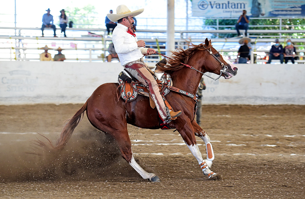 """Muy buena fue esta cala de caballo de Alfredo Quezada Rubio, de Carlos Sánchez Llaguno """"B"""", calificada con 42 puntos"""