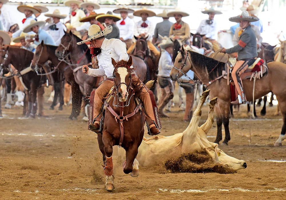 Efraín Ramírez González redondeó este toro durante el coleadero para Hacienda de Terla