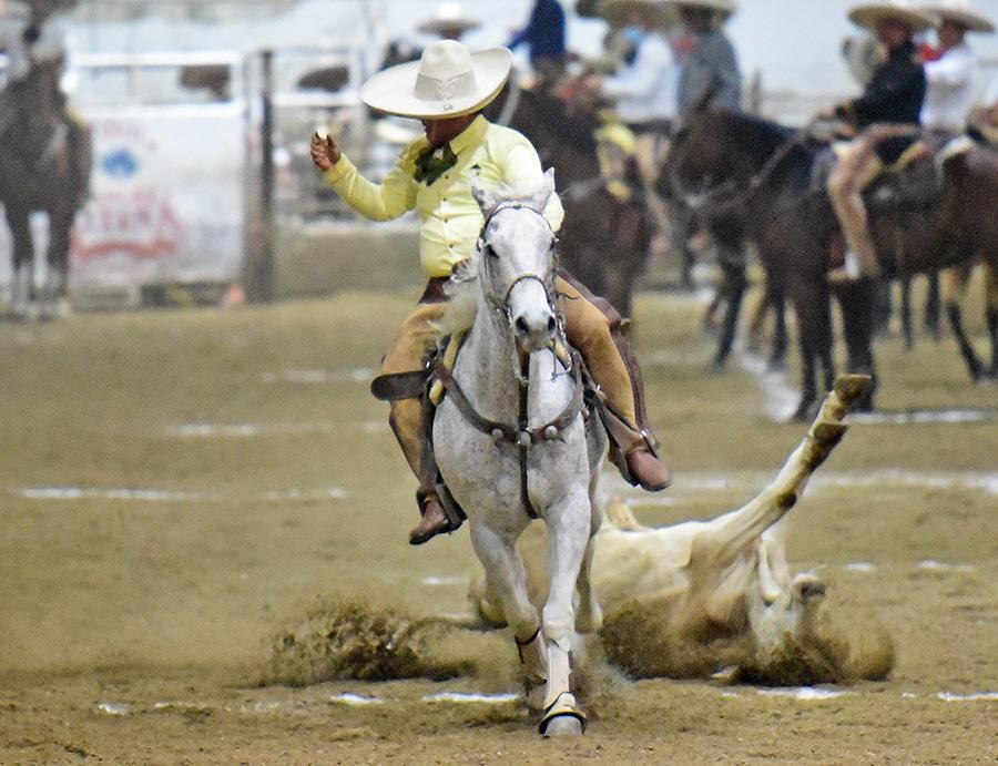 Edesio Camacho Rojo, PUA de Sinaloa, abanicando a este toro en su primera oportunidad del coleadero