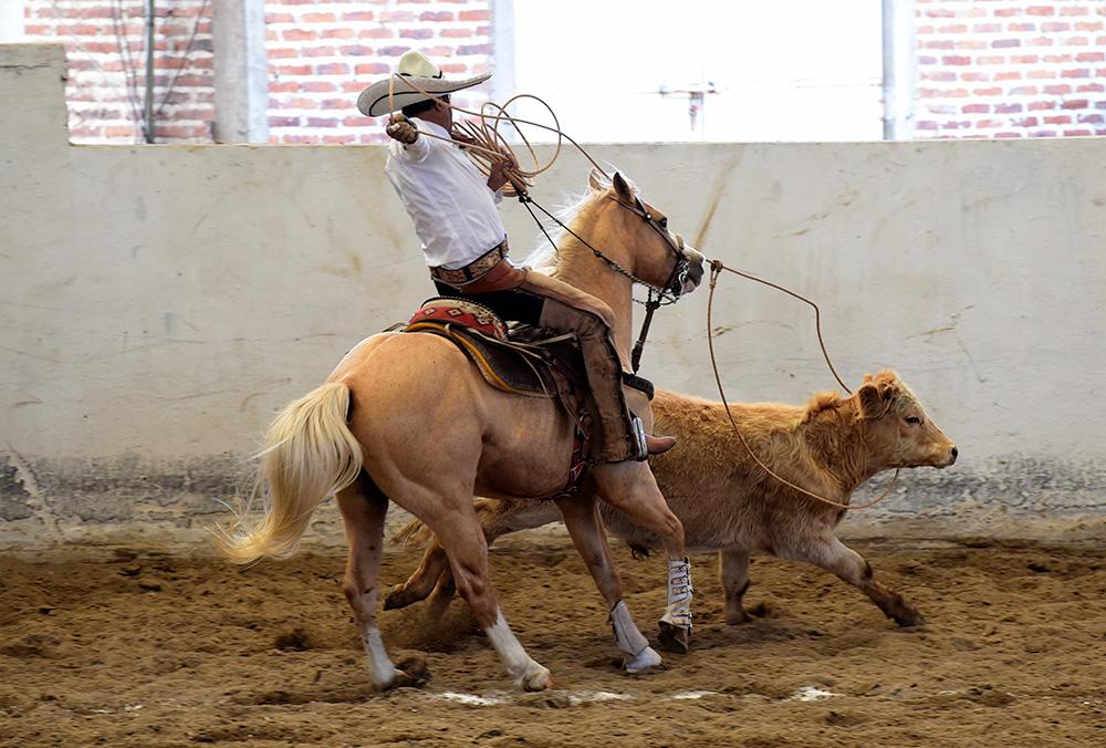 Juan Jaime Muñoz Ledo logrando el lazo cabecero para Hacienda El Rosario de Durango